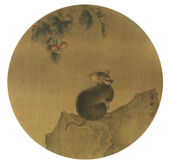 The wise Chinese rat