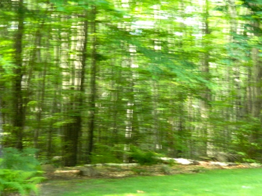 Fuzzy enough, could that be Bigfoot (the dark shape to the left behind the trees?)