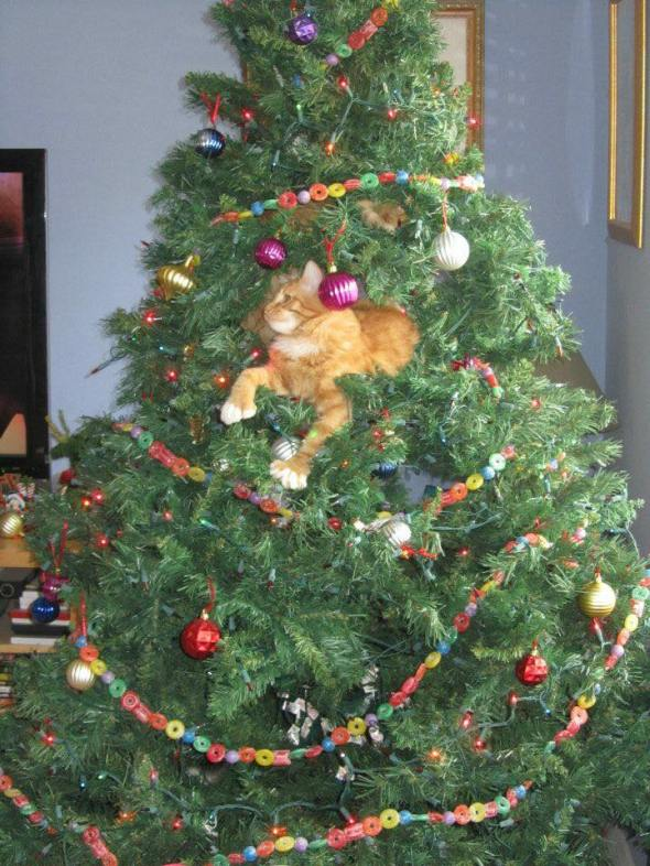 "Florida cat says ""Even in warm climates, cats know how to enjoy the holidays!"""