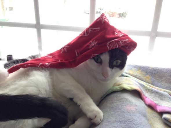 Kitty LOVES the stocking cap! really! maybe?