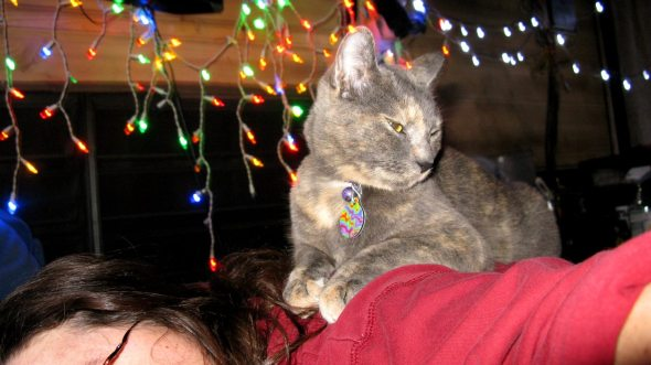 A good kitty owner helps her kitty get a better look at the lights!
