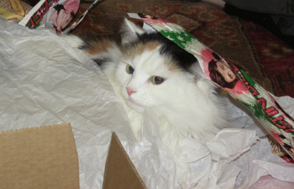 Moxie proves the best gifts are wrapping paper and boxes! yes that might just be Justin Beiber wrapping paper...