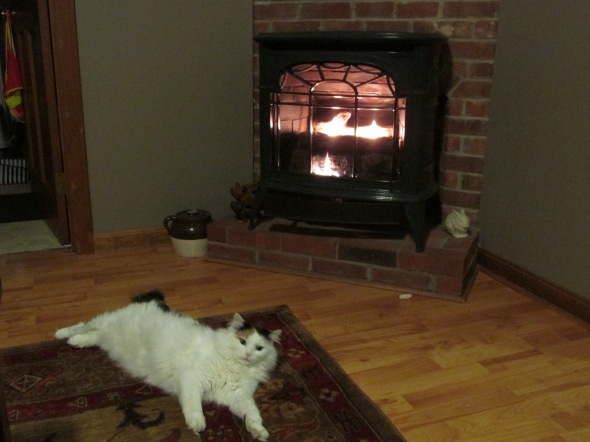 Moxie also enjoys the warm winter fire! Baby it's cold outside!