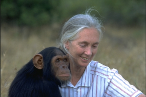 jane-with-chimp