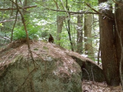Bigfoot in Fox  Forest, he's behind the rock telling me his rock cutting secrets.