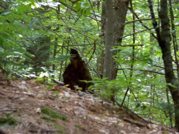 Bigfoot often looses his identity when an image is enlarged... bummer.